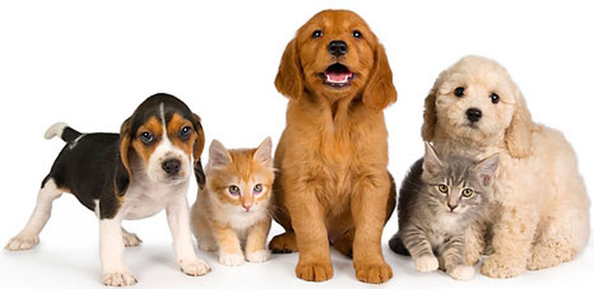 investment-pet-industry-franchising