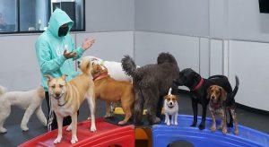 perros en day care dog hotels