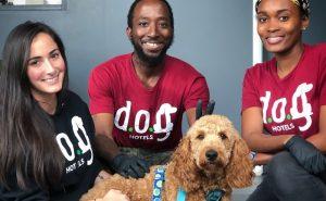 perro y cuidadores dog hotels